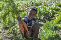 Karlheinz Böhms Äthiopienhilfe: Bessere Ernten durch neue Anbaumethoden