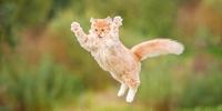 Die Bedeutung von Katzennamen