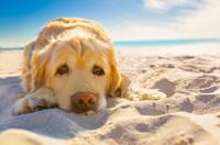 Urlaub mit Hund Insel Rügen Ostsee