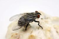 Sommer, Sonne, Summen: So bekämpfen Sie lästige Fliegen