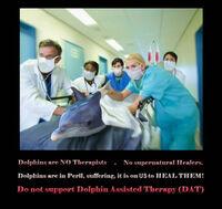 """Tierschützer warnen vor Delfintherapie - Abzocke"""" von Anbietern"""