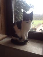 Gekippte Fenster können für Katzen zur Todesfalle werden