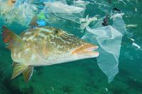 Einmalplastik vermeiden - Plastikmüll in den Ozeanen