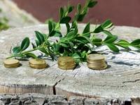 Interview: Ist Nachhaltigkeit in Sachen Geld  die bessere Alternative?