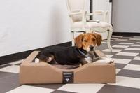 Exklusive Hundebetten mit gesunden Liegeflächen