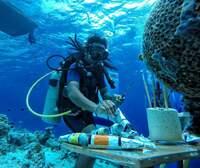 Exklusiv Abtauchen - beim Underwater Festival im LUX* South Ari Atoll