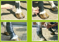 Salzige Pflegeprodukte für Pferde zum Kennenlernpreis