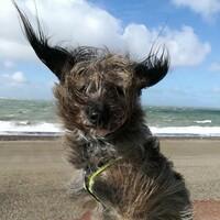 Großer Fotowettbewerb anlässlich 20 Jahre ANUBIS-Tierbestattungen