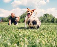 Entspannung pur: Urlaub mit Hund im Ferienhaus