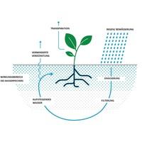 Wasserspeicher für Pflanzen