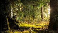 Design Hotel Tyrol lässt seine Gäste im Wald baden
