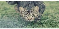 Katzennamen früher und heute