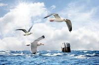 Ferienwohnung Insel Rügen MEERBLICK SAUNALANDSCHAFT WLAN eigener Strandzugang DÜNENRESIDENZ JULIUSRUH BESTLAGE AM MEER das Meer sehen riechen und höre