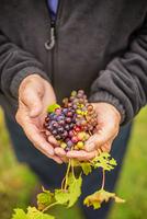 Weinanbaugebiete in Illinois erkunden und auf überraschende Geschmackserfahrungen treffen