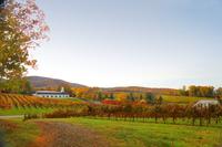 Hochgenuss für alle Sinne: Kunst und Weinkultur werden im Herbst in Virginia gefeiert