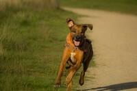 Hunde sind die idealen Trainingspartner