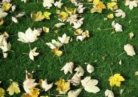 Profi-Tipps für die optimale Rasenpflege: