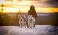 Einfach cool: aktive Wintererlebnisse in Kanada, Schweden und Norwegen
