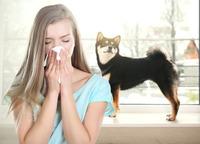 Allergisch - Was tun, wenn der geliebte Vierbeiner zum Gesundheitsrisiko wird?