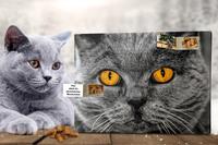 Neuheit: Der individuelle Foto-Adventskalender für Katzen