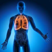 Volkskrankheit COPD ist eine Systemerkrankung