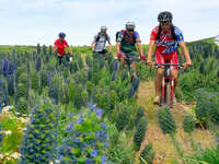 Radfahren auf Madeira: Neue Reisen für Mountainbike und E-Bike!