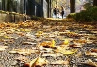 Wenn die Blätter fallen: Wer haftet bei rutschigen Bürgersteigen?