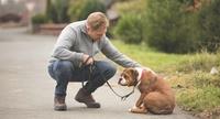 Smartphonenutzung beim Gassigehen schädigt Mensch-Hund-Verhältnis