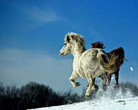 Winterzauber - Reitferien im Schnee