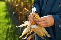 Ergebniskompass: Nützliches AGRAVIS-Tool für die Maissortenwahl