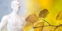 Homöopathie in der Medizin wird nachgefragt