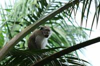 Zertifiziertes Palmöl schützt den Regenwald