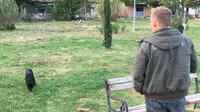 Frei lebende Straßenhunde - eine Beobachtung aus Bosnien-Herzegowina