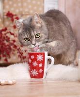 TierklinikenNet wünscht frohe Weihnachten 2018