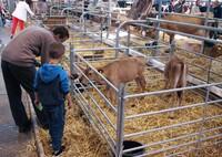 Karneval der Tiere: Tierhaltung und Tierzucht in Brünn, CZ