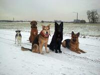 So kommen Hund, Katze & Co durch den Chaos-Winter