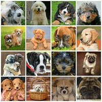 Anschaffung, Pflege und Haltung von Hunden