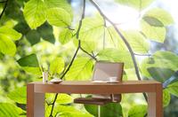 Gesunder Arbeitsplatz mit Atmosphäre und Vitalität