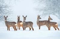 Gefährliche Winterfütterungen - Jäger schwer verletzt