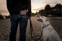 Hundekot ohne Plastik und Berührung aufnehmen