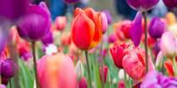 Tipps vom Gärtner aus Stuttgart