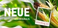 Drei neue Maissorten für das EURALIS Sortiment!