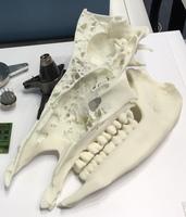 Protolabs präsentiert MicroFine Green und zeigt 3D-Druck-Nachbildung fast ausgestorbener Spezies auf der AM Expo 2019