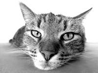 Anschaffung, Pflege und Haltung von Katzen