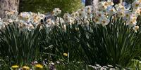 showimage In den Gärtnereien in Stuttgart ist schon Frühling