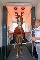 Pferdegesundheit auf der Equitana - Die Equusir BEST-Box: Was man nicht sieht, sichtbar machen.