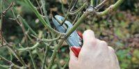 Hecken im Herbst schneiden? Tipps von Gartenbau Stuttgart