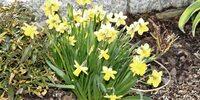 Frühlingstipps vom Gartenbau in Stuttgart