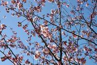 Gartenbau mit Herz in Stuttgart - Rosen richtig pflegen