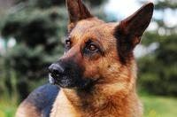 Hartnäckige Analfissur beim Hund: Was kann helfen?